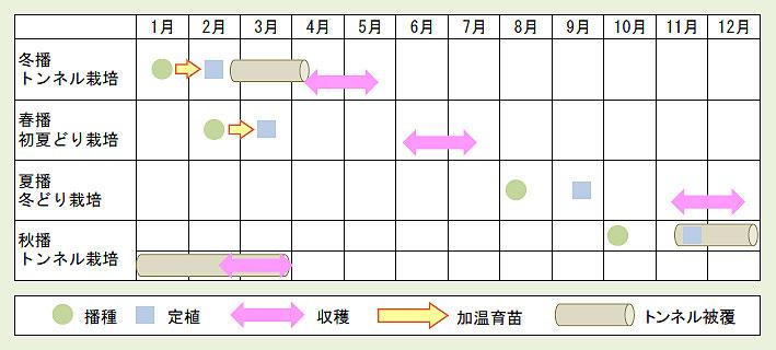 レタス栽培時期表.jpg