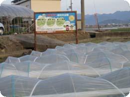 lettuce001.jpg